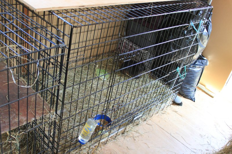 Rabbit Cage in Shed